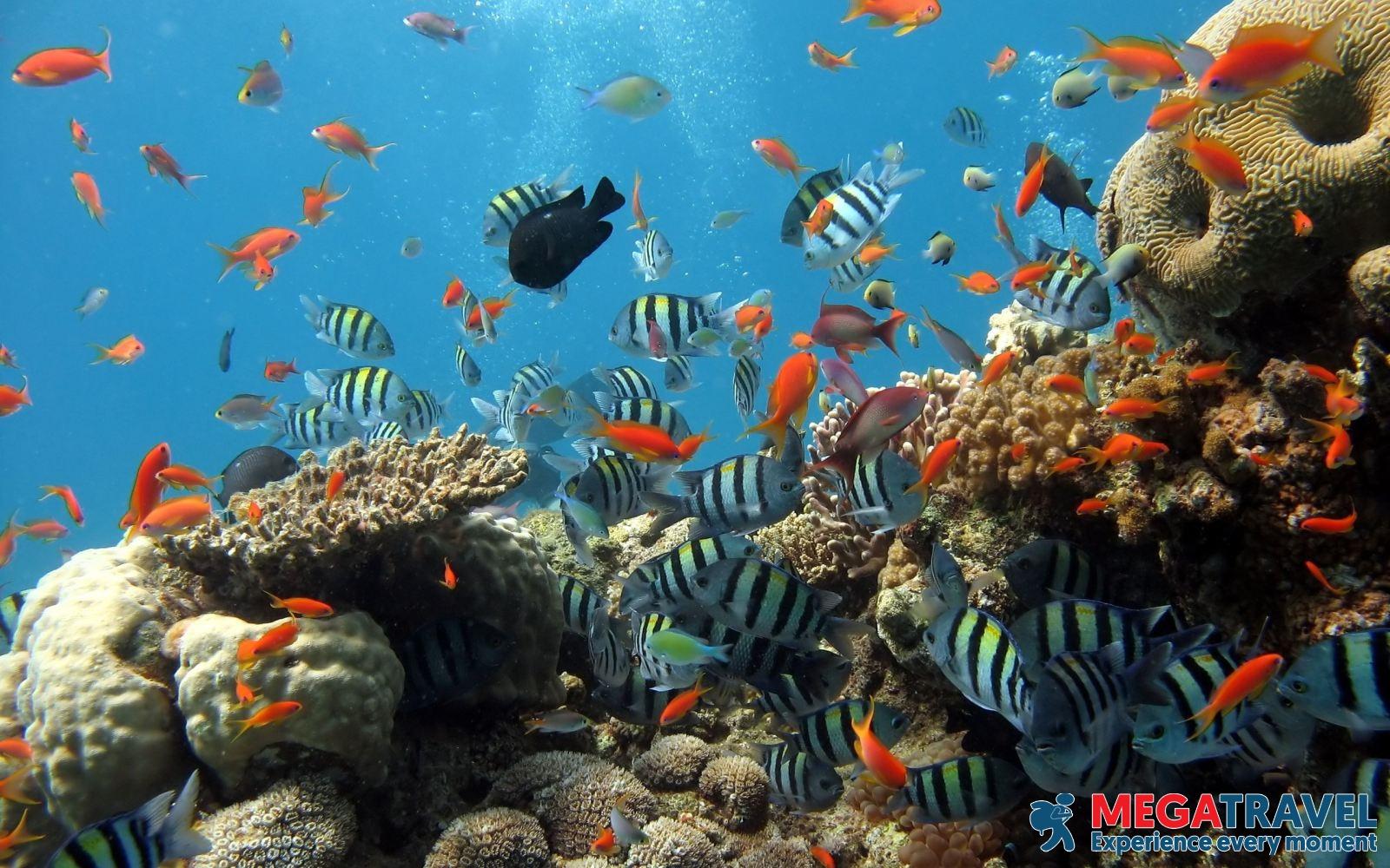 best diving sites in Vietnam 5