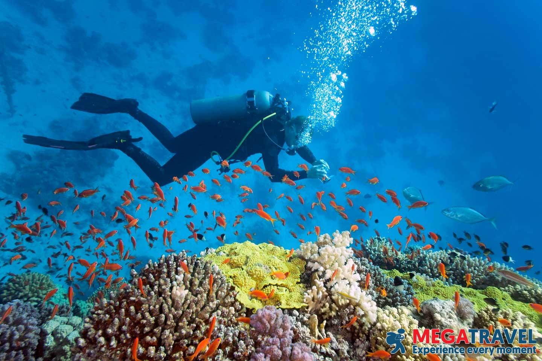 best diving sites in Vietnam 1