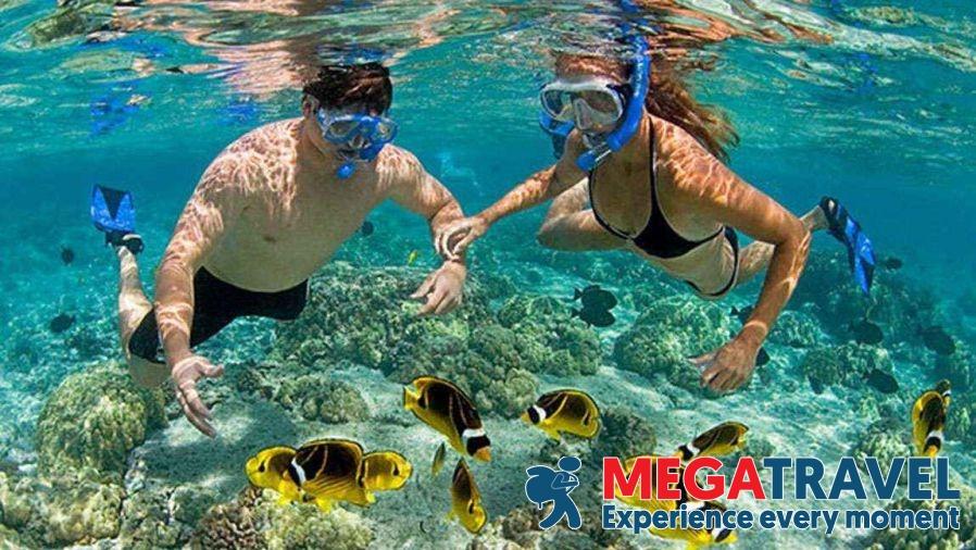 best diving sites in Vietnam 10